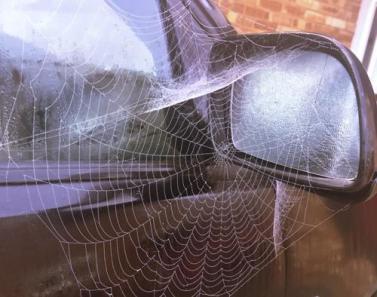 Cobwebs-500x394